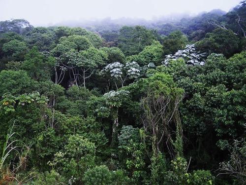 Imagem 1 de 3 de Fazenda Para Mata Reserva Legal A Venda Na Região Do Vale Do Paranapanema, Estado Sp, Com 10.000 Alqueires, Vende Fracionado, Ideal Para Compensação - Fa00263 - 69534624