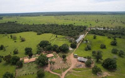 Fazenda Localizada Entre A Lagoa Da Confusão E A Dueré No Estado Do Tocantins