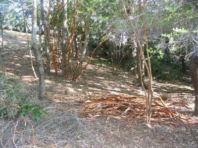 Las Hijuelas Tucapel Bio Bio