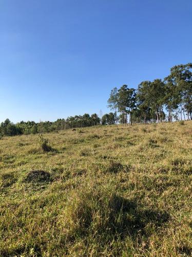Imagem 1 de 14 de D07- Terrenos Para Chácara No Interior