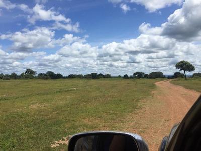 Fazenda Em Riachão - Ma (dupla Aptidão) - 708