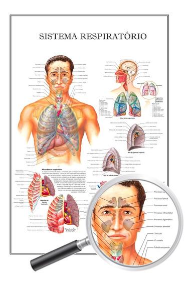 Poster Anatomia P/ Fisioterapeuta Sistema Respiratório 60x90