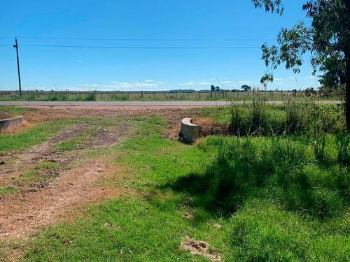 Campo Ganadero, Arrocero En Rocha Ref.: 7587