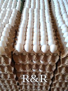 Huevos Directo De Granja