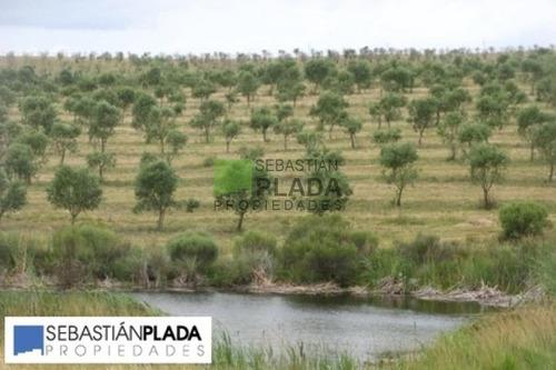 Campo En Pueblo Eden,  | Sebastian Plada Ref:64- Ref: 64