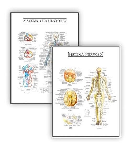 Kit 2 Poster Educação Circulatório Nervoso - Plastificado