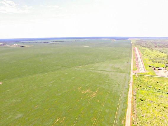 Matupá Mt Fazenda 5.000 Hectares Cód. Fmt-33