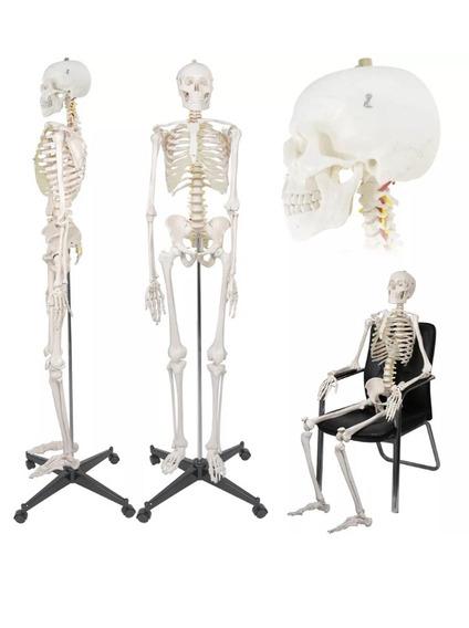 Esqueleto Anatómico Tamaño Real.