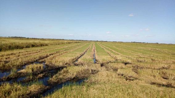 Fazenda Com 650 Hectares Em Viamão - Rs