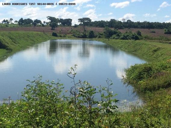 Sítio Para Venda Em Nossa Senhora Do Livramento, Zona Rural - 275193