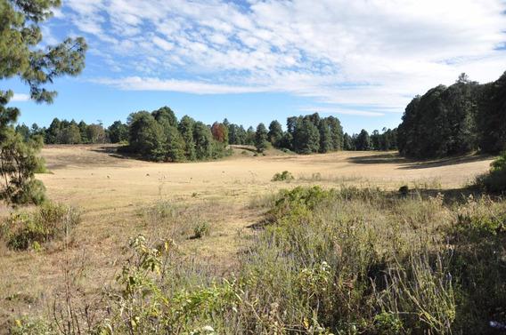 Amplio Rancho: Privado, Verde Y Fértil