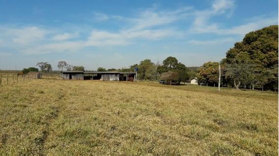 Fazenda A Venda Em Naviraí - Ms (dupla Aptidão) - 847