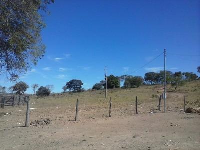 Fazenda Em Pindorama - To P/ Pecuária 198 Alq. - 453
