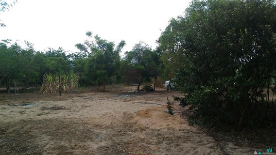 Venda De Granja Em Nísia Floresta, Perto Da Linha Do Trem De Acesso Para Bonfim. - St00001 - 33331665