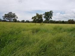Fazenda Para Arrendamento De Plantio De Soja Em Cristalândia - 1157