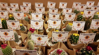 Recuerdos Plantas,cactus,bautizos,matrimonios,baby Shower