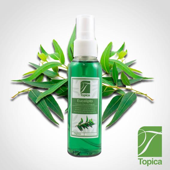 Eucalipto Extracto Oleoso 100% Natural Y Orgánico Aceite
