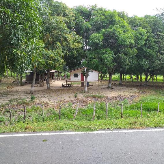 Fundo A Orilla De Carretera.