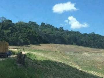 Fazenda Para Venda Em Porto Calvo, Zona Rural - Fz - 077_1-1301513
