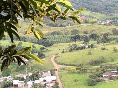 Hermosa Finca Cafetera De 12 Hectáreas En Ceilán Valle
