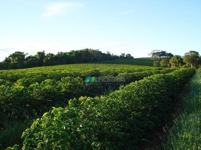 Fazenda De Café 350 Ha Elói Mendes (mg) - Cod: Mta644