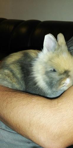Imagen 1 de 1 de Conejos Teddy