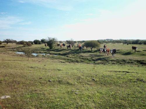 Muy Buen Campo Con Costa Al Río Negro