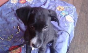Cão Filhote Macho-doação