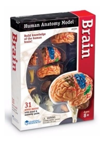 Modelo Anatómico Cerebro Humano Realista Armable Envi+ Meses