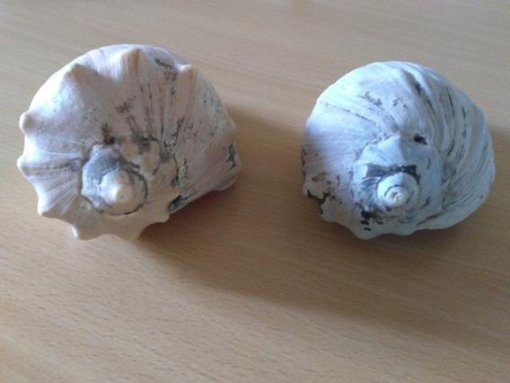2 Caracoles Marinos Grandes Para Decoración O Artesanías