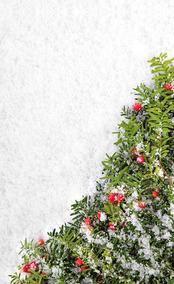 Fundo Fotográfico Temático Lavável Dry-fit - Tema Natal 16