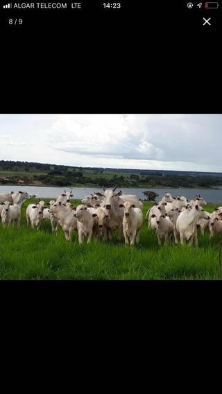 Fazenda Dupla Aptidão Município Santa Vitória