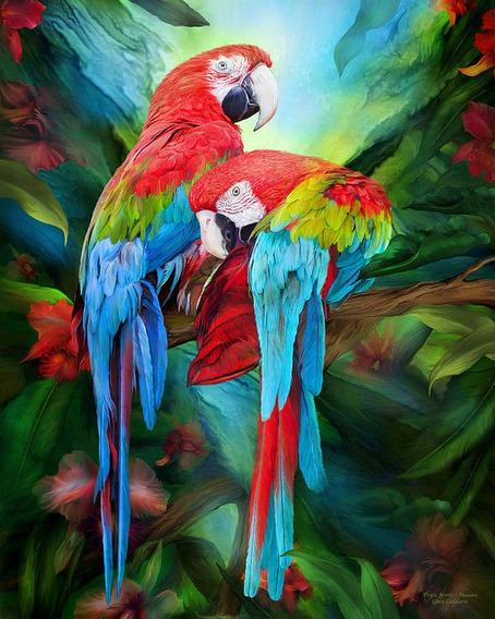 A2364 Papagaio 20*25 5d Diy Diamante Pintura Bordado Casa De