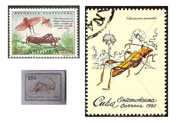 3 Postales Grilo Zignauko