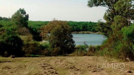 Terreno Para Chacra - Carmelo,uruguay