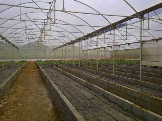 Finca En Venta Sector El Kioskorah: 19-5153