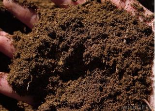 5kg Peat Moss Turba Sustrato Sphagnum Hidroponia Terrarios