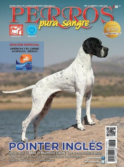 Revista Perros Pura Sangre Pointer Inglés Junio 2019