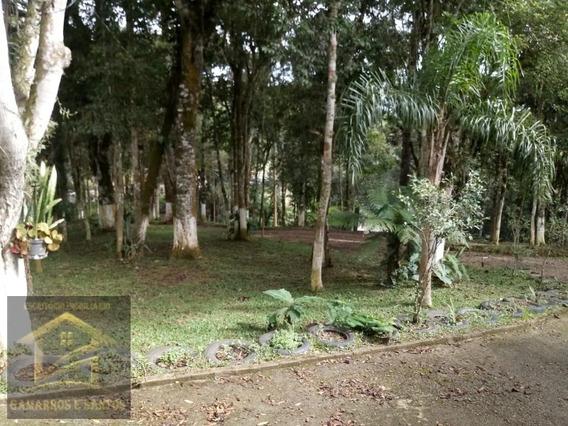 Chácara Com 20.000m² No Palmitalzinho Em Quatro Barras - Ch00021 - 32917258
