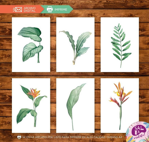 Laminas Para Cuadros Imprimibles Hojas Plantas - Modelo 3
