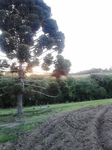 Sitio Venda, Facão - São Miguel Arcanjo/sp - St00124 - 3509780