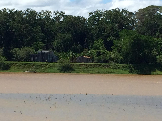 Fazenda De Cacau No Extremo Sul Da Bahia