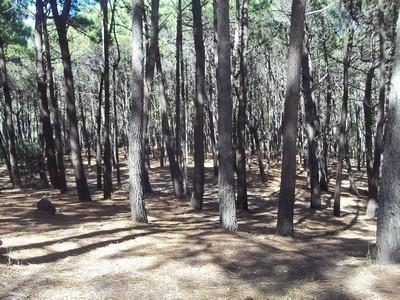 Venta- Lote- Pdo De Villa Gessel- Mar Azul-
