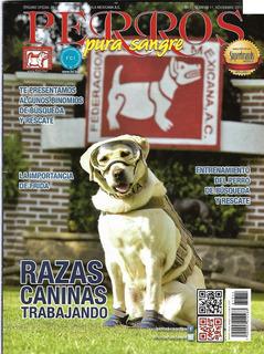 Revista Interés General La Importancia De *frida* En Rescate