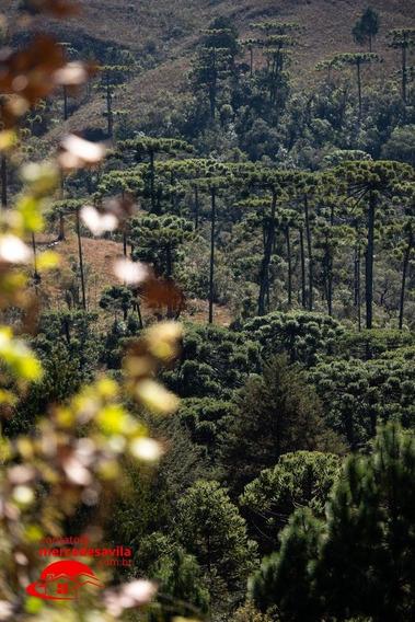 Green Hills Village - Morro Do Elefante - V-100124