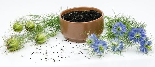 Imagem 1 de 9 de 50 Sementes De Cominho Preto Nigella Sativa Erva Flor