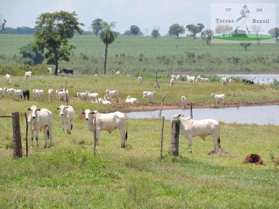 Fazenda Para Venda Em Araçatuba, Rural - Sua 375