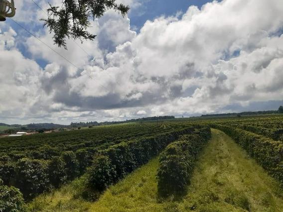 Fazenda À Venda, 466000 M² Por R$ 3.900.000,00 - Zona Rural - Ponte Firme (presidente Olegário)/mg - Fa0193