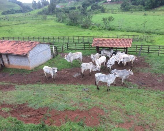 Oportunidade De Fazenda Com Possibilidade Para Loteamento. - Ch0046 - 34651261