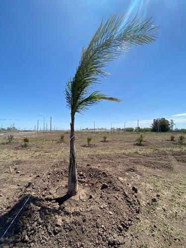 Vendo Terreno De 325 M2 En Ecovida - Lote 171 - Manzana 7
